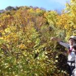 紅葉の金城山を歩く