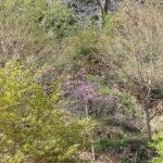 秋川の天王岩は爽やかでした