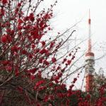 東京タワーと桃紅氏の作品