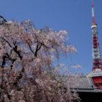 春爛漫の東京タワーと奉修行列