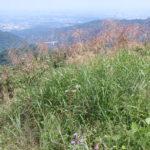 高尾山そばの小下沢で遊び、景信山東尾根を下る